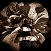 Candy Stripe Rose Sepia  Art Print