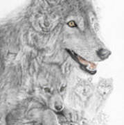 Canis Lupus V The Grey Wolf Of The Americas - The Recovery  Art Print