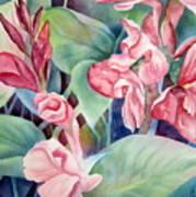 Canna Art Print by Deborah Ronglien