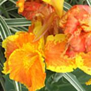 Canna Lilies Art Print