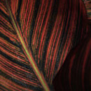 Canna Leaves Art Print