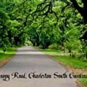 Canopy Road Art Print