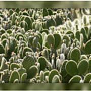 Canvas Of Cacti Art Print