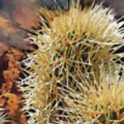 Canyon Cactus Art Print