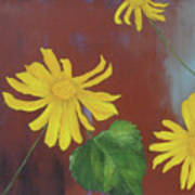 Canyon Sunflower Art Print