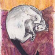 Cap Nap Art Print