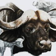 Cape Buffalo Art Print