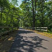 Cape Cod Rail Trail Trees Eastham Ma Fence Art Print