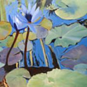 Capistrano Lillies Art Print