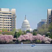 Capitol Blossoms Art Print
