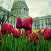 Capitol Tulips Art Print