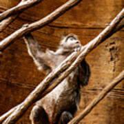 Captivity Art Print
