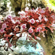 Carambola Flower Art Print