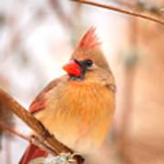 Cardinal Bird Female Art Print