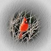 Cardinal Centered Art Print