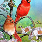 Cardinal Day 3 Art Print