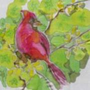 Cardinal In Palo Verde Art Print