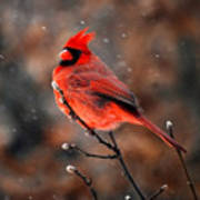Cardinal On A Snowy Day Art Print