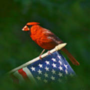 Cardinal On American Flag Art Print