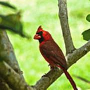 Cardinal Render Art Print
