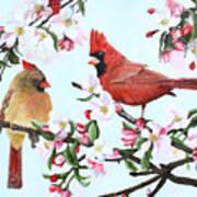 Cardinals And Apple Blossoms Art Print