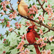 Cardinals In Apple Blossoms Art Print