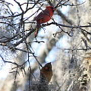 Cardinals In Mossy Tree Art Print