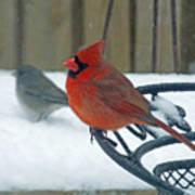 Cardinals Snow Day Art Print