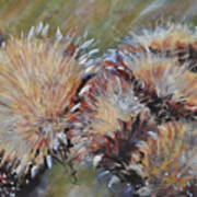 Cardoon  Art Print