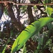 Caribbean Banana Leaf Art Print