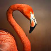 Caribean Flamingo Portrait Art Print