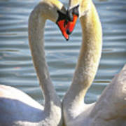 Caring Swans Art Print