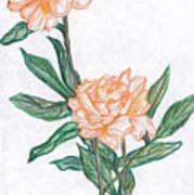 Carnation Flower Art Print
