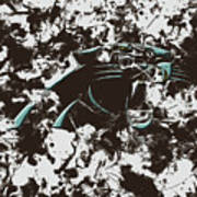 Carolina Panthers 1b Art Print
