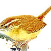 Carolina Wren On Bird Feeder Animal Portrait Art Print