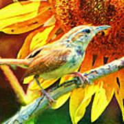 Sweet Carolina Wren Art Print