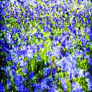 Carpet Of Blue Art Print