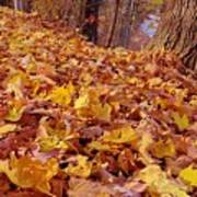 Carpet Of Fall Leaves Art Print