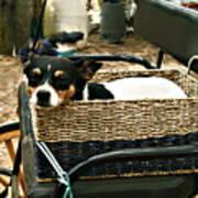 Carriage Dog Art Print