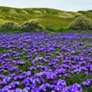 Carrizo Plain National Monument Wildflowers Art Print