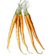 Carrot Variation Art Print