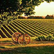 Cart Wheels At Barossa Valley Vineyard, South Australia Art Print by Peter Walton Photography