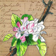 Carte Postale. Blossoming Apple Art Print