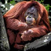 Cartoon Comic Style Orangutan Sitting In Tree Fork Art Print