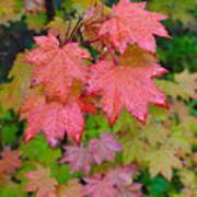Cascade Autumn Leafs 4 Art Print