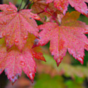 Cascade Autumn Leafs 5 Art Print
