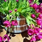 Cascading Purple Tulips  Art Print