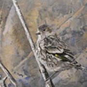 Cassin's Sparrow Art Print