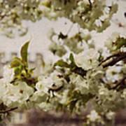 Castle Blossoms Art Print