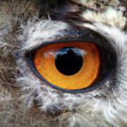 Castle In The Owl's Eye Art Print